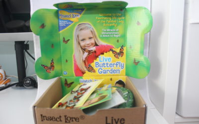litlscience: Insect Lore Butterfly Garden