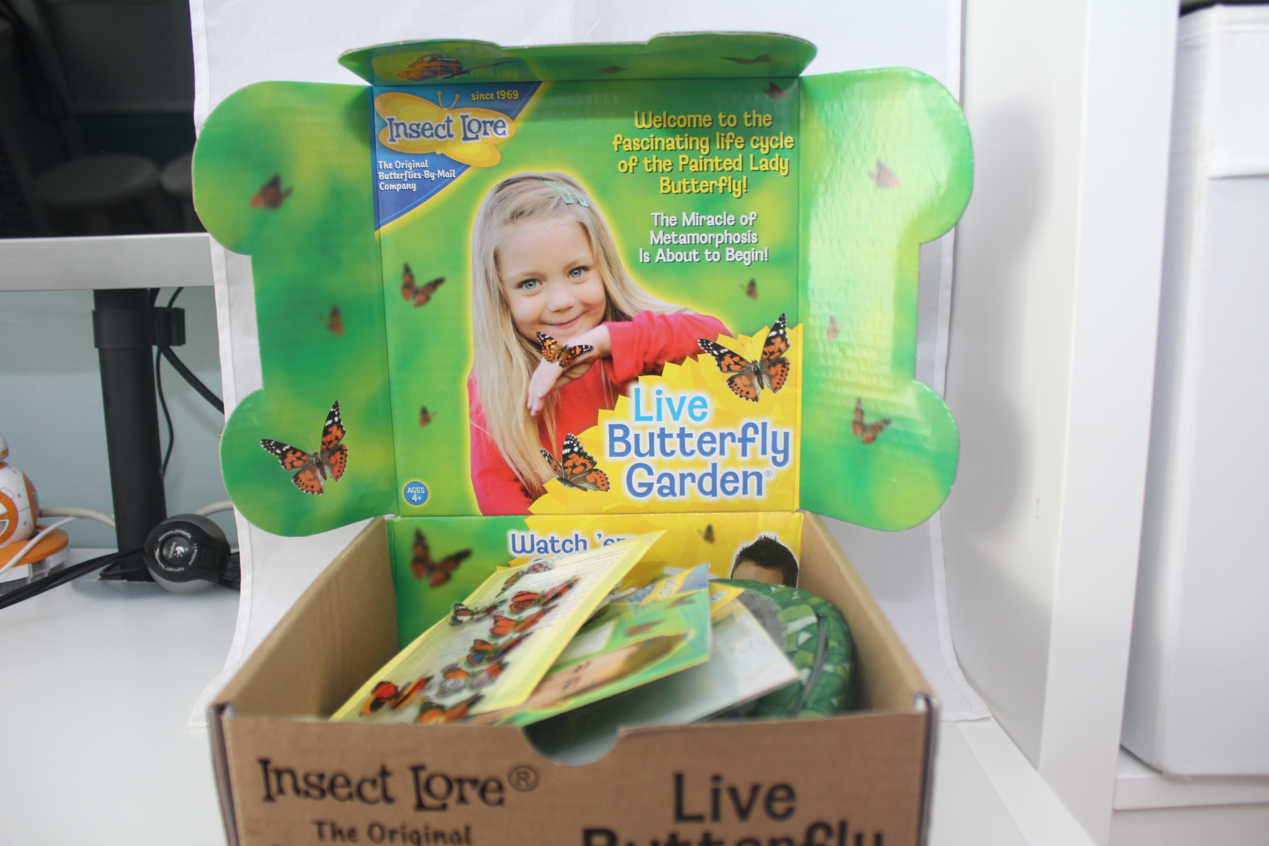 Insect Lore Live Butterfly Garden Video